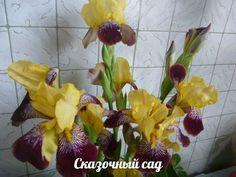"""""""Сказочный сад (Фиалки, цветы, овощи, экзотика))) - мои группы В КОНТАКТЕ https://vk.com/club58687005 и на ОДНОКЛАССНИКАХ http://ok.ru/group52140865093796"""