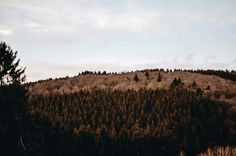 The wild is calling Mountains Live folk Scandinavia