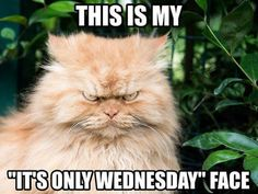 """15 Funny Wednesday Memes - """"This is my """"It's only Wednesday"""" face."""" # wednesday Humor 15 Funny Wednesday Memes to Make Your Hump Day a Little Better Funny Wednesday Memes, Happy Wednesday Quotes, Hump Day Humor, Hump Day Quotes Funny, Happy Friday, Friday Memes, Wednesday Motivation, Monday Humor, Wednesday Coffee"""