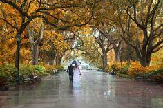 Forsyth Park Inn   Fall / Autumn foliage at Forsyth Park, Savannah
