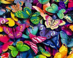 Amazing Colors of Butterflies.