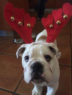Hugo says Merry Christmas!!