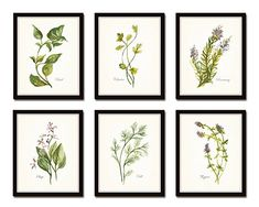Watercolor Herbs Print Set 6 Giclee Fine Art Prints - Unframed