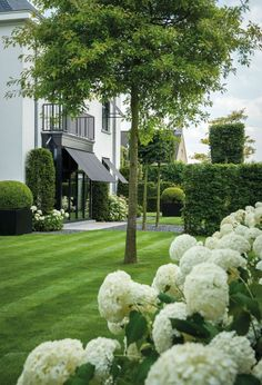 Hydrangeas and well-manicured lawn