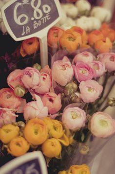 Parisian fleurs        Fleurs parisiennes
