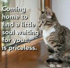 Pretty Cats, Beautiful Cats, Animals Beautiful, Cat Quotes, Animal Quotes, Animal Memes, Qoutes, Crazy Cat Lady, Crazy Cats