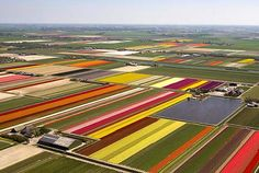 At first glance, it looks like a giant child armed with a box of crayons has been set loose upon the landscape. Vivid stripes of purple, yellow, red, pink, orange and green make up a glorious technicolour patchwork. Yet far from being a child's sketchbook, this is, in fact, the northern Netherlands in the middle of the tulip season.