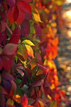 A Botanikus kert mindig maga a csoda. Lélek simogató az ott tett séta. Legalább is nekem sokszor segített már zűrös napok után is. A napsüt...