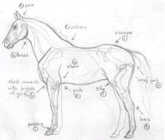 If you have never drawn a horse before I suggest drawing Part One first: This one is similar. What you have to do first is draw a line at the angle the horse is rearing up. Then draw the circles an...