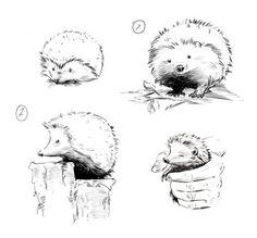 hedgie the hoglet Pygmy Hedgehog, Baby Hedgehog, Hedgehog Art, Hedgehog Illustration, Illustration Art, Animal Drawings, Art Drawings, Hedgehog Tattoo, Shetland