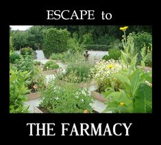 ESCAPE to THE FARMACY for your physical, mental, emotional and spiritual ails'. Escaping to, immersing in and eating from nature brings so many body, mind and spirit benefits! Mindfulness Therapy, Garden Pictures, Holistic Wellness, Healthier You, Medicinal Plants, Beautiful Gardens, Health Benefits, Natural Remedies, Spiritual