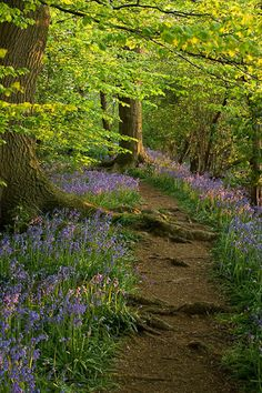 I love a path lined with wildflowers! Along a Wooded Path - Clive Nichols