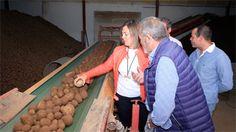Crece un 2,9 % la superficie de patata en Castilla y León y alcanza las 20.500 hectáreas http://www.revcyl.com/web/index.php/economia/item/9948-crece-un-2-9-la-super