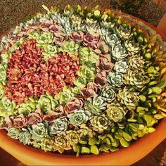 Succulent mix ❤️