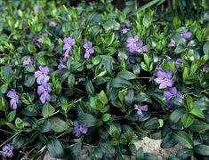 Sophie's World, Plant Species, Green Garden, Garden Inspiration, Gardening Tips, Outdoor Living, Garden Design, Home And Garden, Landscape