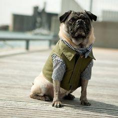 The Fieldworker Dog Vest #pugs