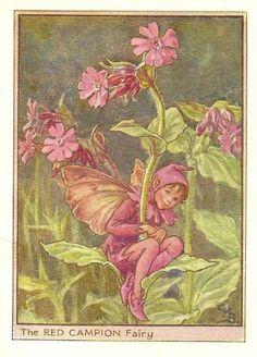 http://www.wellandantiquemaps.co.uk/lg_images/The-Red-Campion-Fairy.jpg