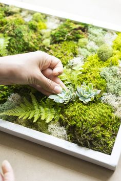 How to Make a Carefree Moss Garden - Dalla VitaYou can find Moss garden and more on our website.How to Make a Carefree Moss Garden - Dalla Vita Moss Wall Art, Moss Art, Planting Vegetables, Growing Vegetables, Vegetable Garden, Garden Plants, Indoor Plants, Air Plants, Garden Walls