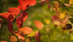 41 Free Fall Wallpapers and Backgrounds for Your Computer: Autumn by Speartime
