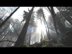 """""""Er-leuchtung"""" Die Natur-Spiegel deiner Seele - YouTube"""