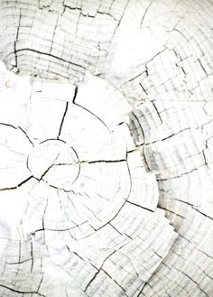 .·:*¨¨*:·.Blanc.·:*¨¨*:·.White wood texture