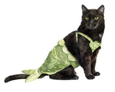 Cat fish. This mermaid outfit is one of Petco's top 10 Halloween costumes for pets.