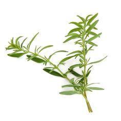 Proprietà e benefici dell'issopo, una pianta nota nell'antichità ed utilizzata a scopo terapeutico. L'issopo era considerata una pianta sacra dai romani.