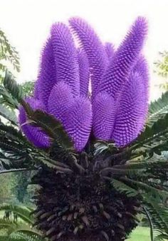 rare and exotic flowers and plants Strange Flowers, Unusual Flowers, Rare Flowers, Beautiful Flowers Photos, Amazing Flowers, Pretty Flowers, Unusual Plants, Exotic Plants, Purple Wedding Flowers