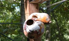 Growing Gourds for Birdhouses | Natural Learning Initiative