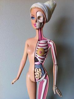 Barbie Gets Dissected, Reveals Her Anatomy   DesignTAXI.com