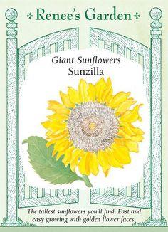 Renee's Garden Giant Sunzilla Sunflower Seeds (Helianthus annuus) for sale online Garden Soil, Garden Seeds, Lawn And Garden, Garden Plants, Gardening, Big Plants, Tall Plants, Growing Plants, Giant Sunflower Seeds