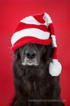 Merry Christmas!  thank Dog. photography