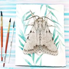 When asked to paint butterflies  but instead find inspiration in their less colorful cousins the moths. This moth means so much to me and not because it's a cottonwood dagger moth but because of so many other reasons. I took a week sketching and creating on every surface trying to work out what direction I wanted my work to go. The main focus is the moth and I wanted almost a patterned background that was not in focus and still had the vibrant colors I love to use. Not any background would…