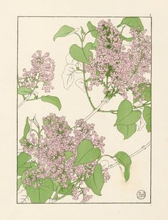 Foxglove Flower Study in the Art Nouveau Style Artist probably J Foord. Research ongoing ...