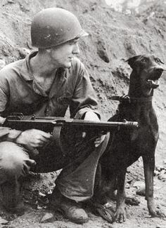 Marine Dogs of WWII – M1 Pencil Military Working Dogs, Military Dogs, Police Dogs, Pinscher Doberman, Doberman Love, Blue Doberman, Malinois, War Dogs, Special Forces