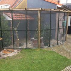 Bird Aviary, Bird Cages, Bird Houses, Birds, Pets, Animals, Vivarium, Birdhouses, Dwarf Rabbit