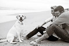 Dog on beach. Meghan & Russell's Engagement Shoot in downtown Melbourne, FL » Concept Photography