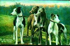 "Postcard - ""Greyhounds on the Alert"" posted in 1910, Raphael Tuck and Son's Card"