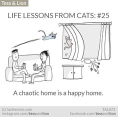 LIFE LESSONS FROM CATS: #25 - A chaotic home is a happy home.