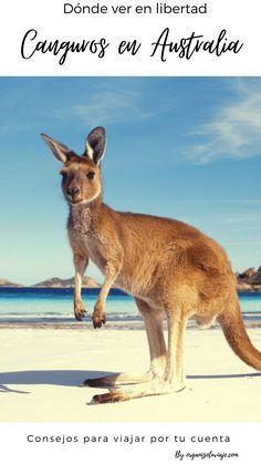 130 Ideas De Viajar A Oceanía Por Tu Cuenta Consejos Para Recorrer El Continente En 2021 Viajar A Australia Nueva Zelanda Australia