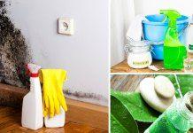 7 způsobů jak se vypořádat s plísní levně a účinně