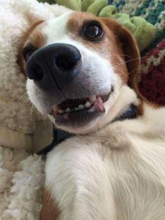 Happy beagle http://snapmilfs.com/?id=amature_milf_fucking