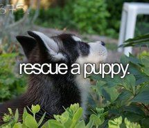 wanna do this so I feel like I m really helping someone and the puppy!! And I love puppies !!