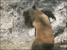 The Jacobs Bigfoot — Northwest Pennsylvania (2007) | The Ultimate Ranking Of Bigfoot Sightings