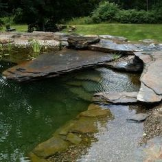 Natural Swimming Pool