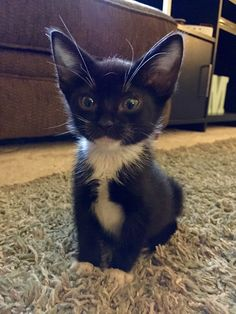 These adorable kittens will warm your heart. Cats are wonderful companions. Funny Animal Memes, Funny Animal Pictures, Cute Funny Animals, Cute Baby Animals, Cat Memes, Animals And Pets, Funny Cats, Funny Memes, Funniest Animals