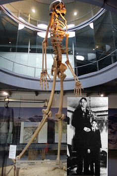 """Videos: OVER 1000 Giant skeleton have been found in recent years. 7 Metre """"Giant Skeleton"""" On Display In Switzerland? Ancient Aliens, Ancient History, Human Giant, Giant People, Tall People, Nephilim Giants, Human Oddities, Site Archéologique, Arte Obscura"""