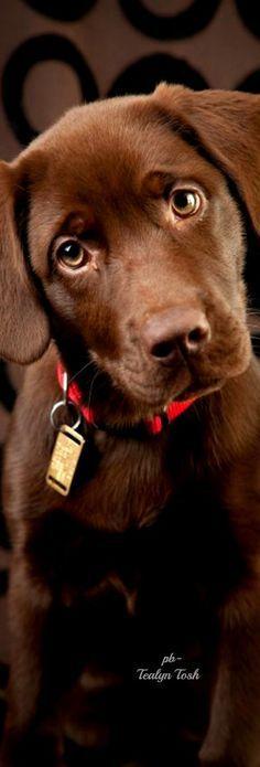 Beautiful Dogs, Animals Beautiful, Cute Animals, Cute Puppies, Cute Dogs, Dogs And Puppies, Doggies, Big Dogs, I Love Dogs