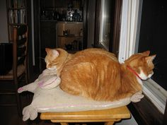 Two Headed Cat Loaf | Flickr - Photo Sharing!