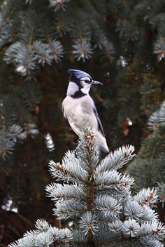 Out the front window All Friends, Gods Creation, Blue Jay, Wildlife, Birds, Nature, Animals, Crows, Fnaf